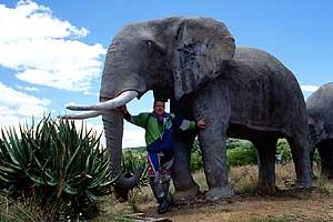 Erster kontakt mit der afrikanischen tierwelt